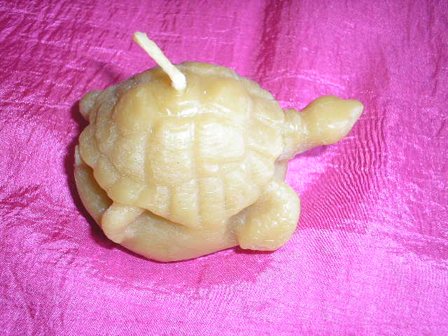 bougie tortue