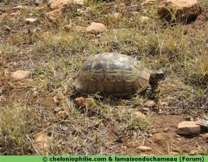 tortue afrique