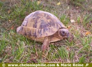 Quizz tortue